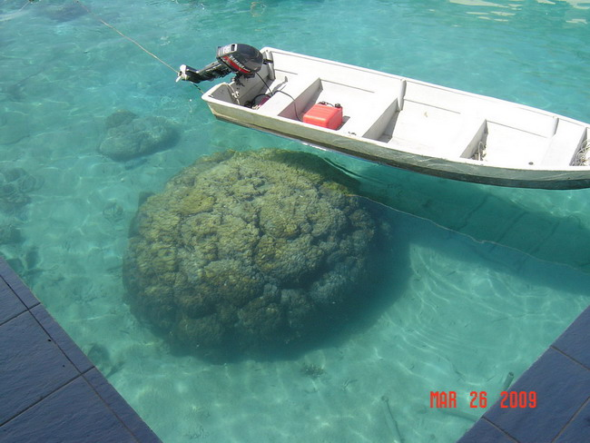 big coral rock by the marine park dock